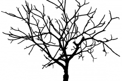 Graphic-Tree-by-Micael-Kallin-1