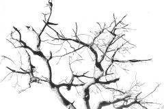 Bird-Tree-by-Erik-Arnell