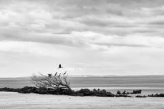 Birds-Escape-Bazaruto-by-Micael-Kallin