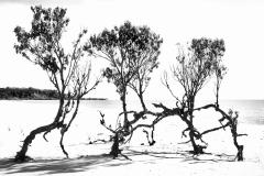 Dancing-Trees-Amazonia-by-Micael-Kallin