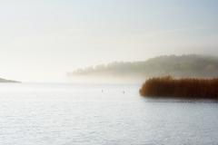 Fog-by-Erik-Arnell